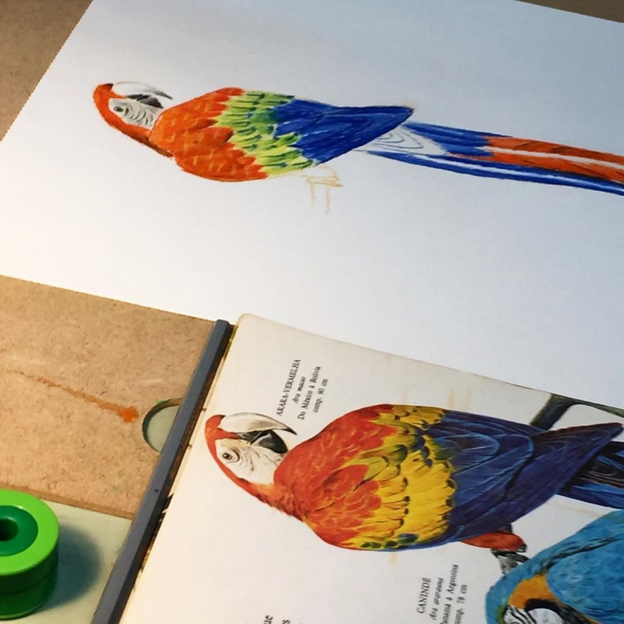 Coloured Pencils' Workshop
